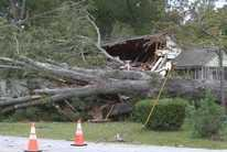 Irma brings down two giant oak trees in Statesboro