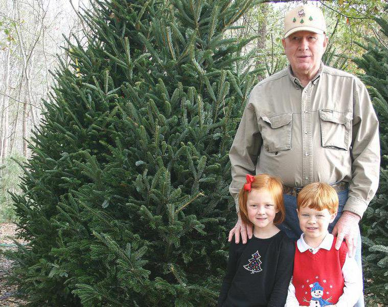 Robert Wiggins stands among his Frasier firs with his granchildren,  4-year-olds Avery Wiggins, left, and Dake Williams, at his home Wednesday. - Christmas Tree Farm Goes From Seedling To Success - Statesboro Herald