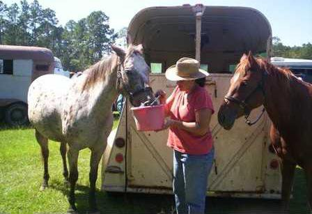 Saddle Up St  Jude trail ride this weekend - Statesboro Herald