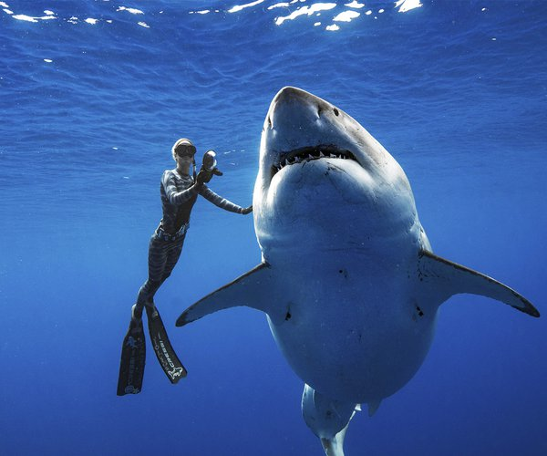 Great White Shark photo.jpg
